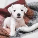 Собака в доме по православию — отношение церкви к собакам